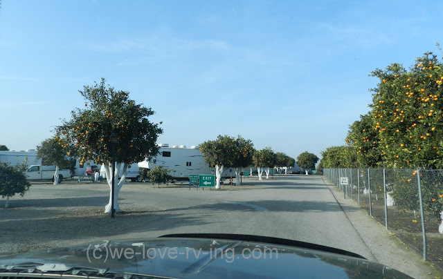 The rv park shows parking spots between the orange trees
