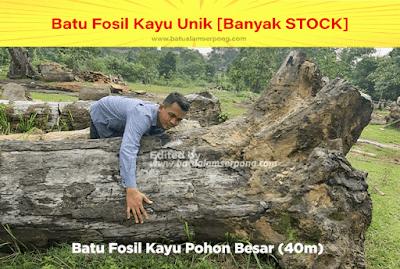 batu kayu bentuk pohon besar jual di