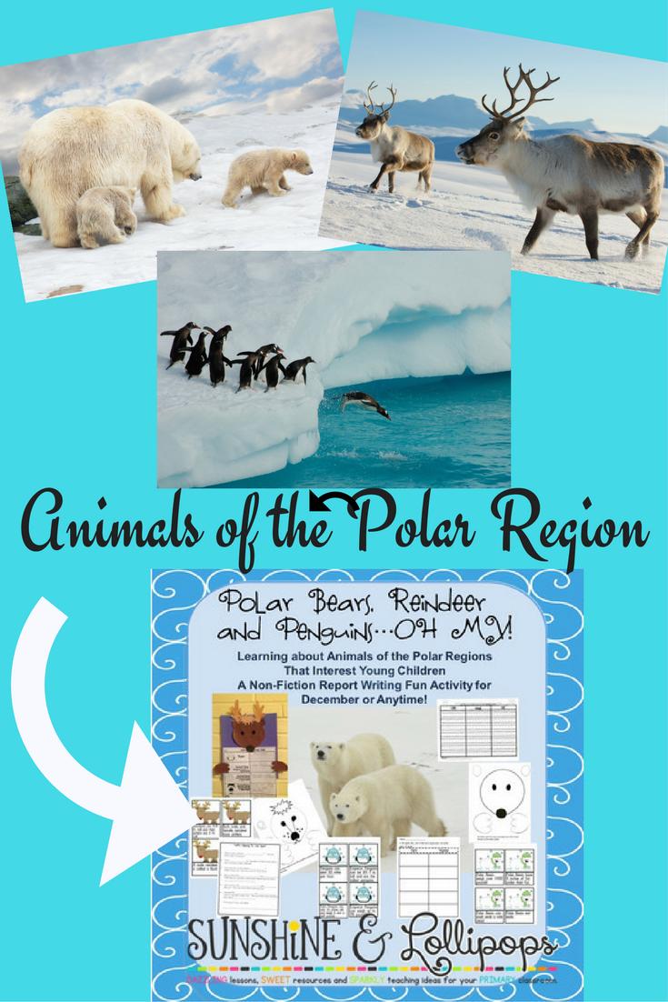 polar region animal report template - 28 images - polar regions page ...