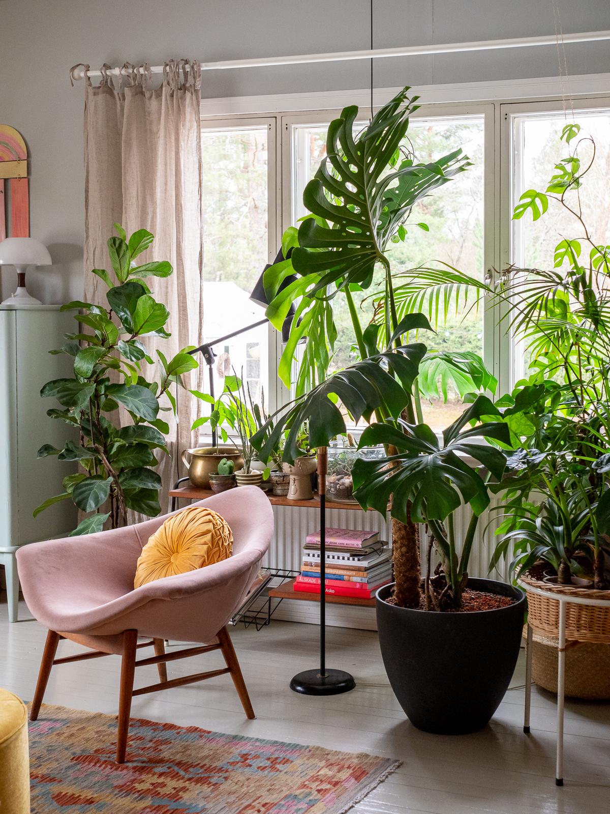 suuret ja helpot viherkasvit