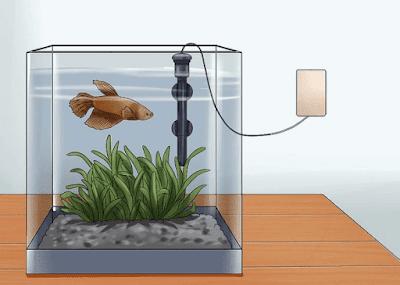 Mengatur Suhu Akuarium