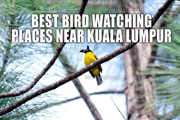 Kuala Lumpur Bird Watching Spots