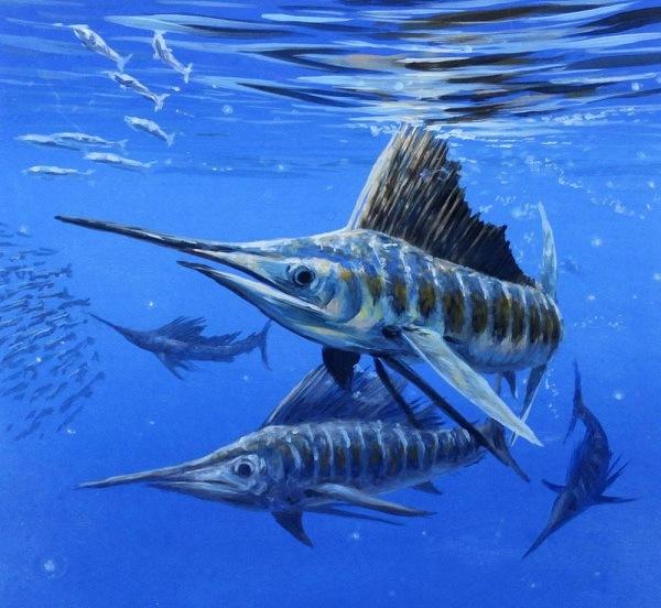 Chiêm ngưỡng vẻ đẹp của Sailfish tại S.E.A Aquarium