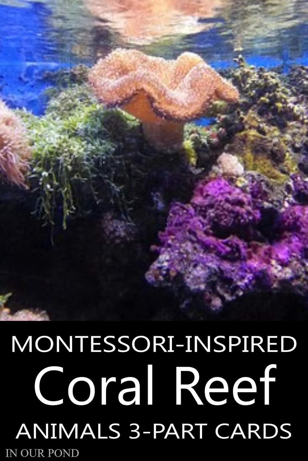 0fb08cb625f9fe Montessori-Inspired Coral Reef Toob 3-Part Cards - In Our Pond