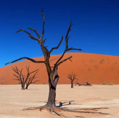 10 طرق للبقاء على قيد الحياة في الصحراء