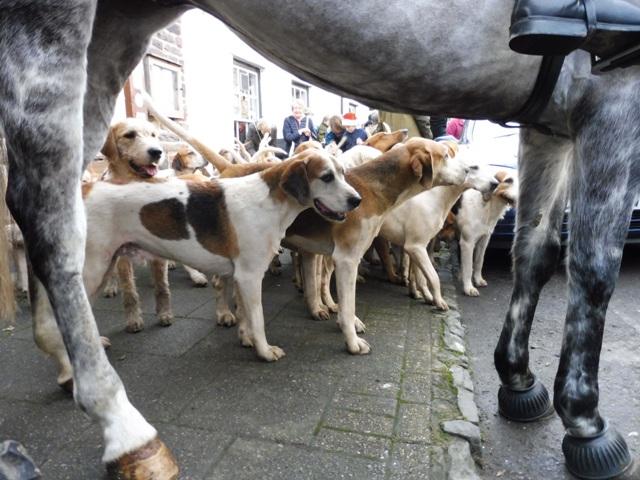 Rutas de polichinela - Cercados para perros ...