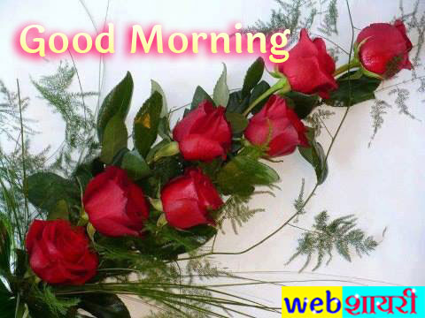 good morning pink rose,good morning pic with love and rose,