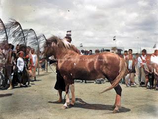 perpaduan kuda cendana dan kuda batak di kabanjahe
