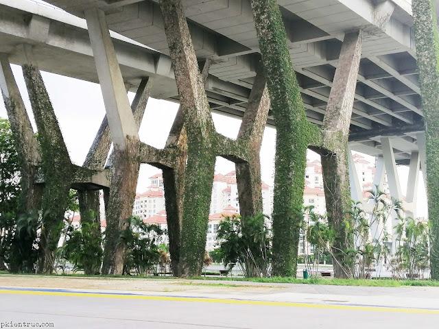 dây leo kỳ diệu phủ xanh kết cấu cột bê tông ở singapore- ảnh 3