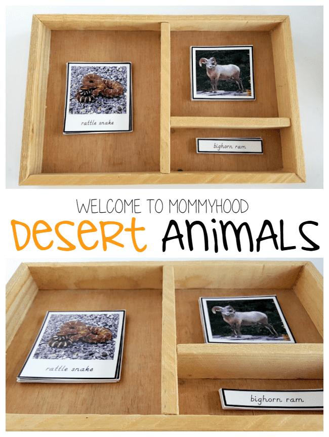 Our Montessori Spring: Desert animals language activities by Welcome to Mommyhood #montessori, #montessoriactivities