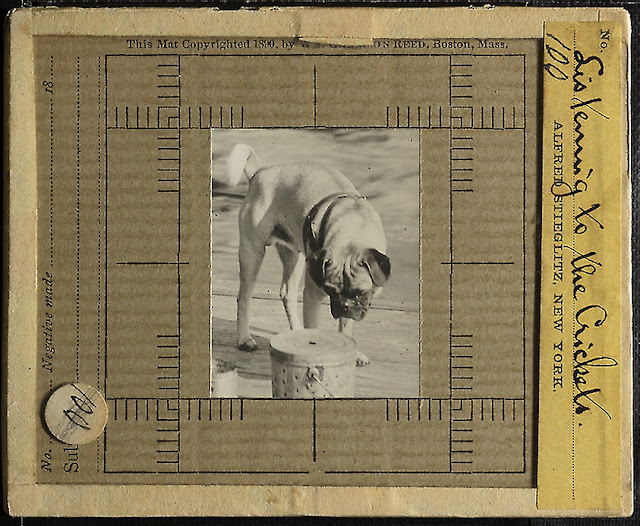 Listening to crickets lantern slide. This month's pets in art at Companion Animal Psychology news