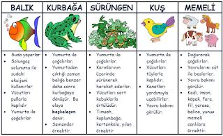 Hayvanlar 5. Sınıf Fen Bilimleri Konu Anlatımı