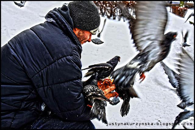 karmienie ptaków gołębi zima zdjęcie