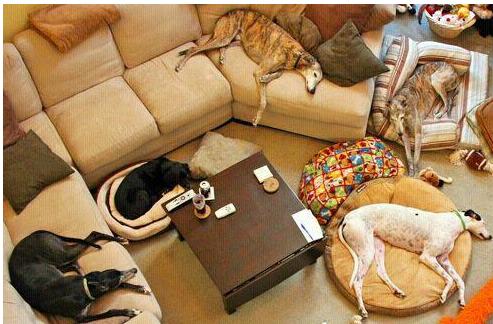 Loving Pet Hotel