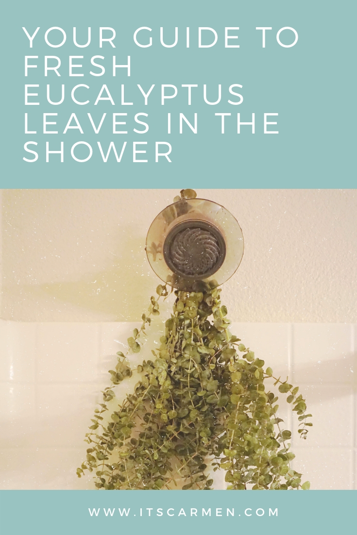 Your Guide to Fresh Eucalyptus Leaves in the Shower - how long does it last?