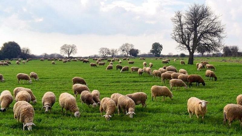 Διαδικασία υποβολής αιτήσεων χωροταξικής ανακατανομής βοσκοτόπων για το 2021 από κτηνοτρόφους της ΑΜ-Θ