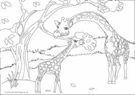 Giraffe Familly Eating Leaves Coloring Pages