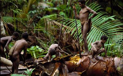 Suku Kombai, Suku Primitif di Indonesia yang Terancam Punah