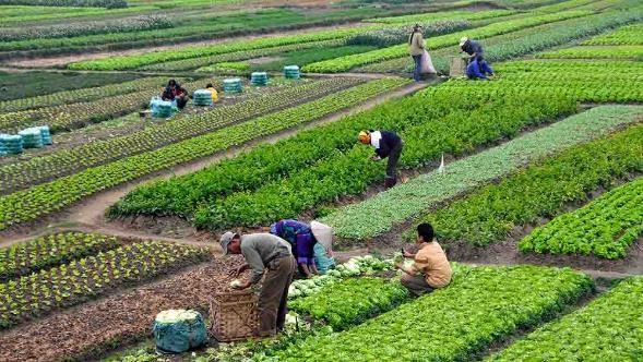 Agricultura: qué es, características, tipos, importancia y beneficios