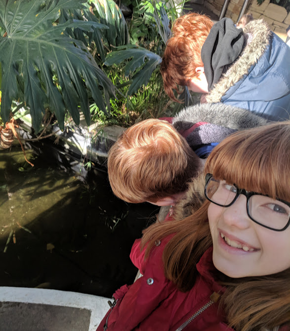 5 Reasons to Visit the Leonardo da Vinci: A Life in Drawing Exhibition at Sunderland Museum & Winter Gardens with Kids - fish pond
