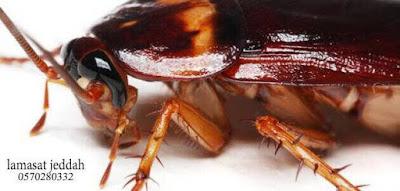 القضاء على الصراصير الصغيرة في المطبخ , صراصير الحمام