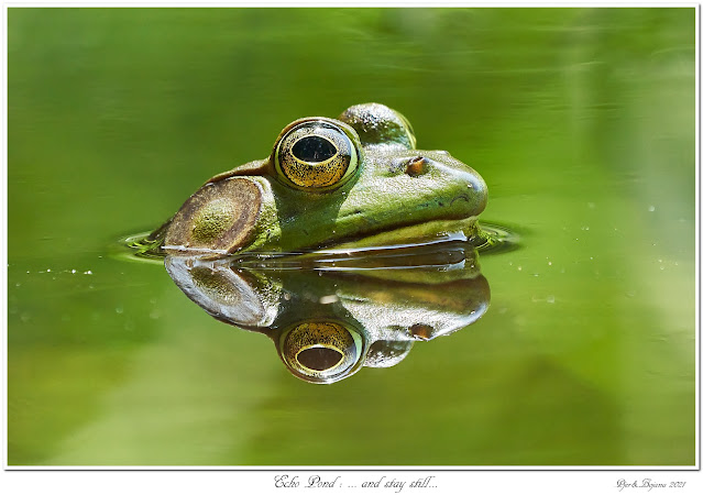 Echo Pond: ... and stay still...