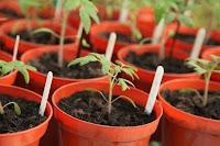 usaha bibit tanaman, bisnis bibit tanaman, bisnis tanaman, bisnis bibit, cara usaha bibit tanaman, cara bisnis tanaman, bisnis tanaman yang menguntungkan, bibit tanaman laris
