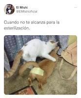 esterilizar a los gatos es mi pasion humor meme