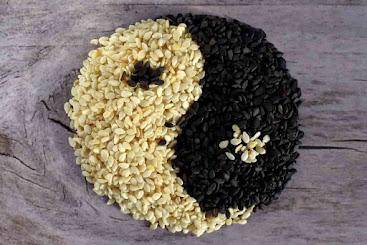 can dogs eat sesame seeds, sesame seeds safe for dogs, can dogs have sesame seeds