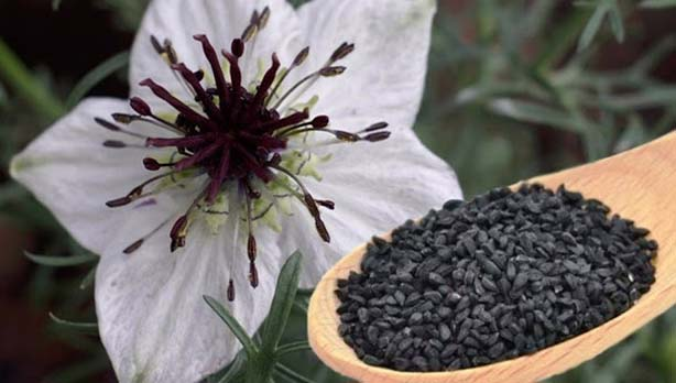 """These granules are though smaller in size but are extremely beneficial. The Prophet Muhammad (PBUH) said, """"Use Nigella seeds because it contains treatment of every disease except death."""""""