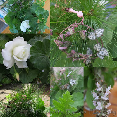 June garden posy with cuttings to root