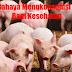 Suka Makan Daging Babi? Waspadai Beberapa Bahayanya