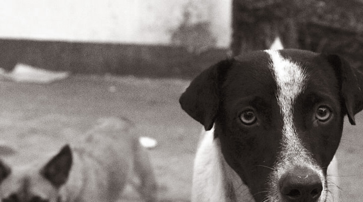 stray-dogs-in-gajraula