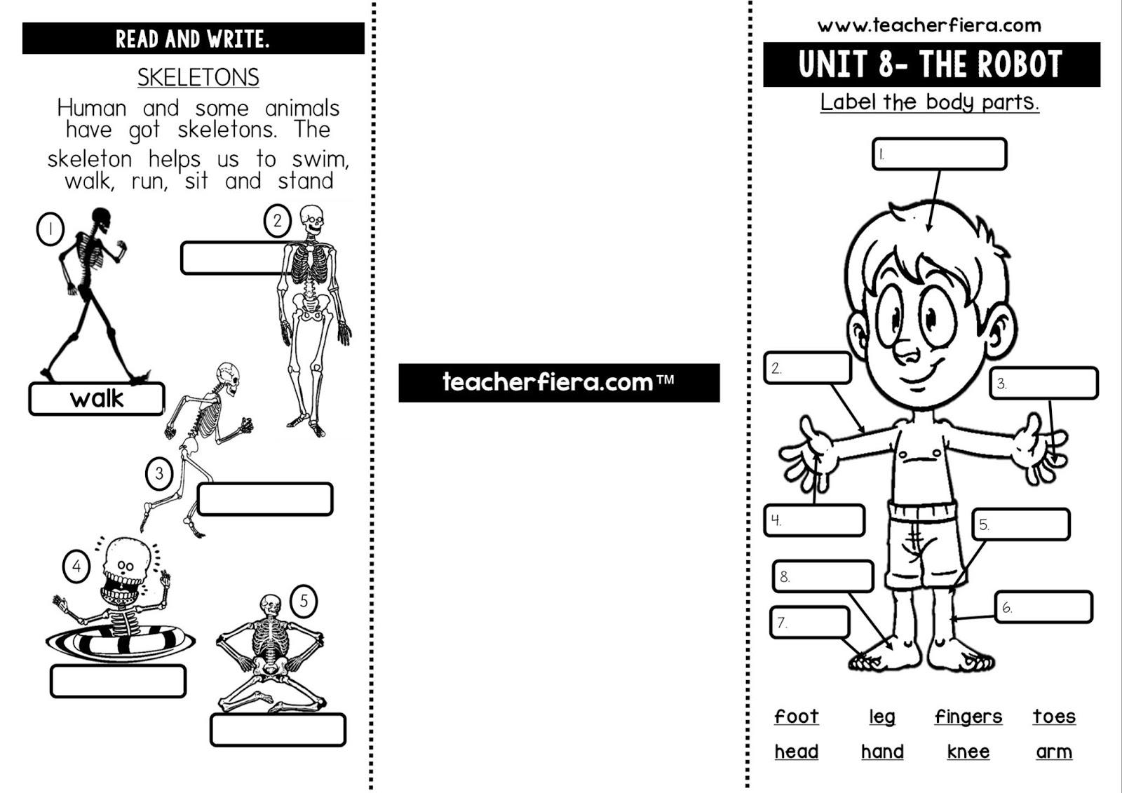 Teacherfiera Year 2 Unit 8 Brochure