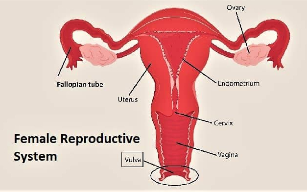 vulvar cancer pictures and Treatment