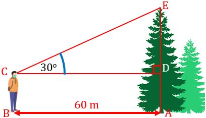 Menentukan-Tinggi-Pohon-dengan-Perbandingan-Trigonometri