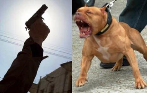 مقدم شرطة بالرباط يضطر لإطلاق رصاصتين على كلب حرضه صاحبه لمهاجمة عناصر الشرطة وتعريض سلامتهم للخطر✍️👇👇👇