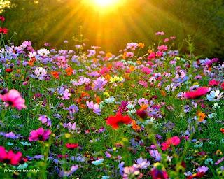 Resultado de imagem para primavera linda
