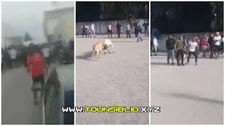 """(بالفيديو و الصور) سوسة : """"مصارعة اكباش"""" تتحوّل إلى مواجهات و تبادل للعنف بين المتساكنين"""