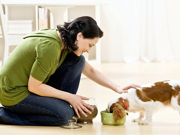 Choosing The Pet Stores That Are Right For You And Your Pet