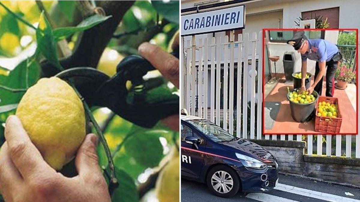 Furto Limoni Carabinieri Acireale coppia catanese