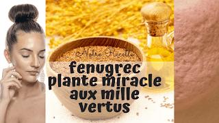 Fenugrec plante miracle aux mille vertus digestives et soins de la peau