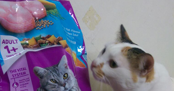 Whiskas Dry Cat Food Pckets