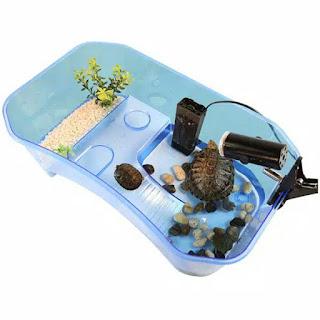 akuarium-kura-kura.jpg