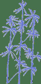 Palmtree-vector