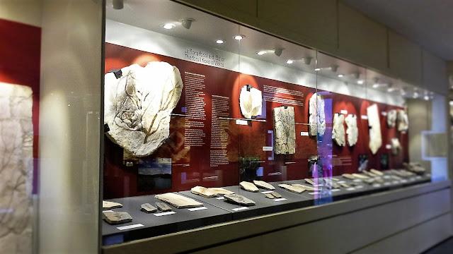 I fossili di Bolca