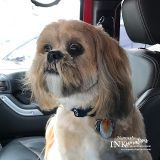 Our Benji - Excited to go home!  | Nature's INKspirations by Angie McKenzie