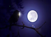 bird on a tree branch staring moon with love