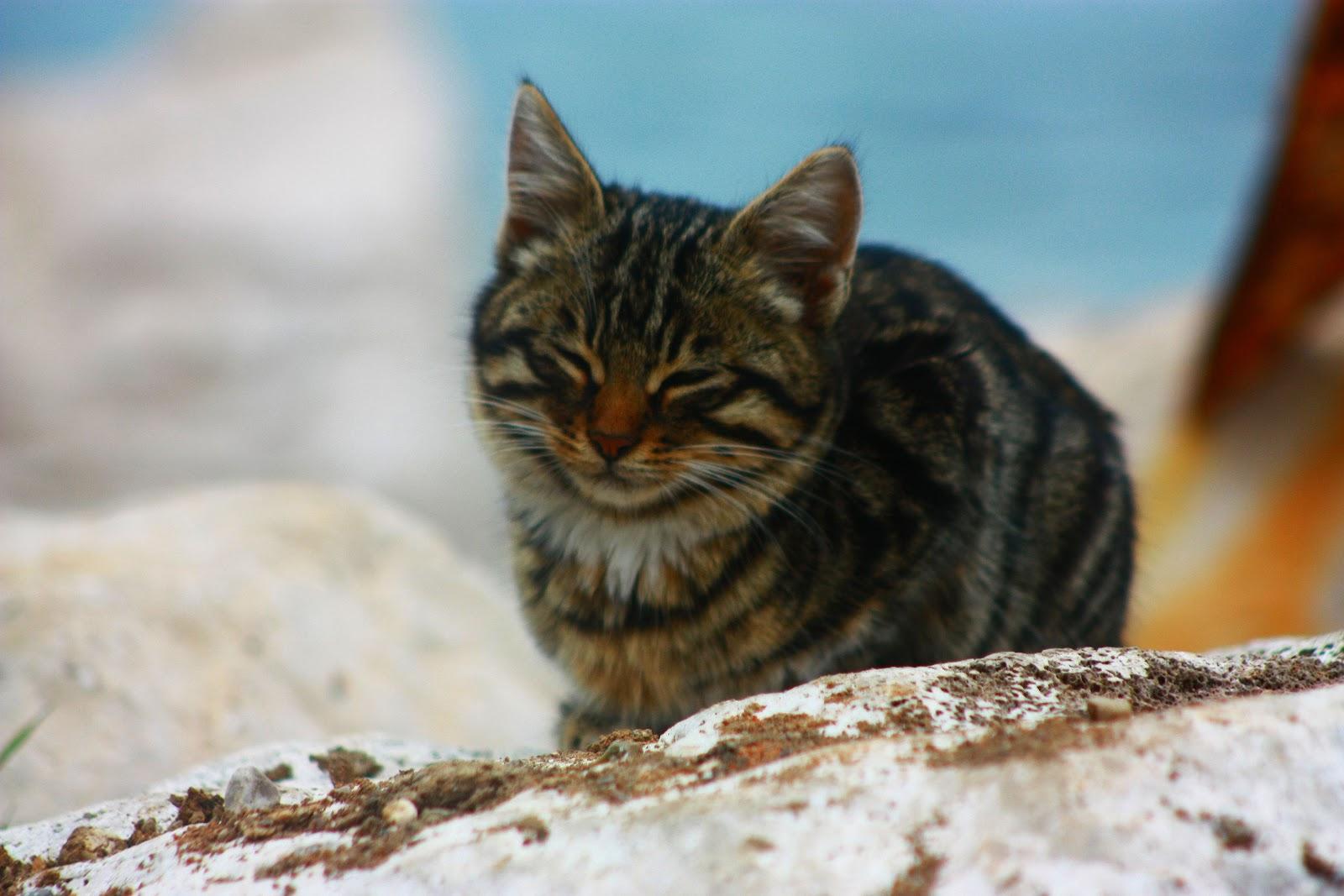 Wallpaper Cute Cats Kittens Cute Cats 5 Cute Cats