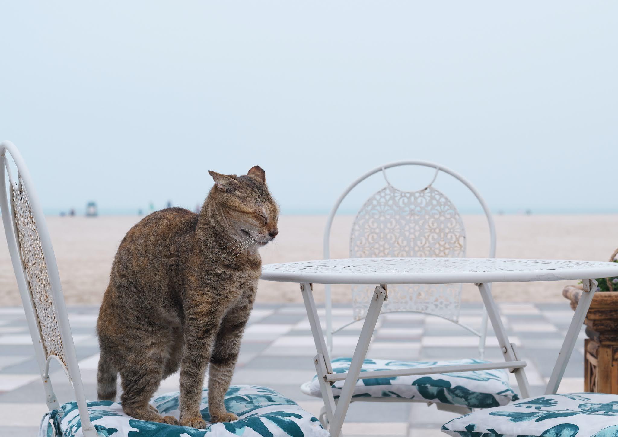 海辺のネコ